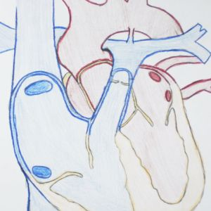 Learn about blood flow in the heart.
