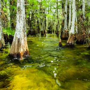 Learn about Everglades National Park.
