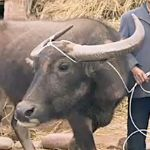 One musician found out what it would mean to give a family a water buffalo