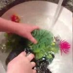 Learn how to clean your aquarium.
