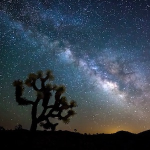 Learn about Joshua Tree National Park.