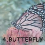 Learn more about the life cycle of a butterfly.