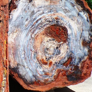Learn about Petrified Forest National Park.