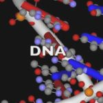 Learn about recombinant DNA.