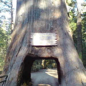 Learn about Redwood National Park.