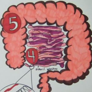 Learn about the digestive system.